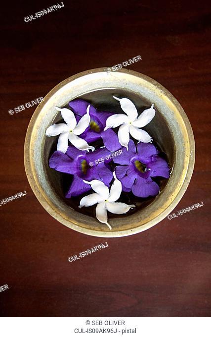Table with a bowl of jasmine tree flowers, Sri Lanka
