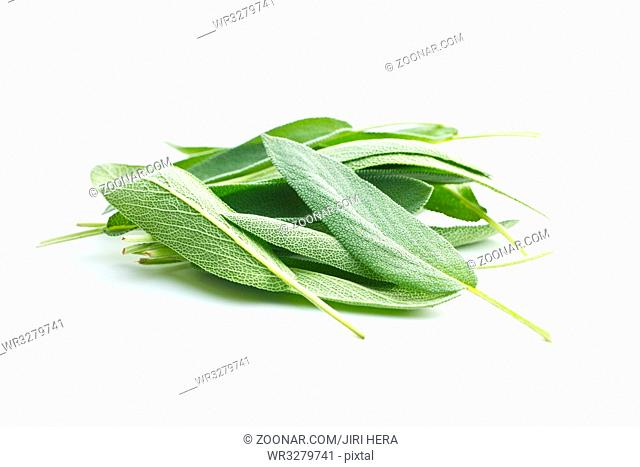 Salvia officinalis. Sage leaves isolated on white background. Garden sage