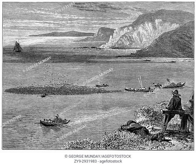 1870: Watching small fishing boats catching and bringing in pilchards off the Lizard, a peninsula in southern Cornwall, England