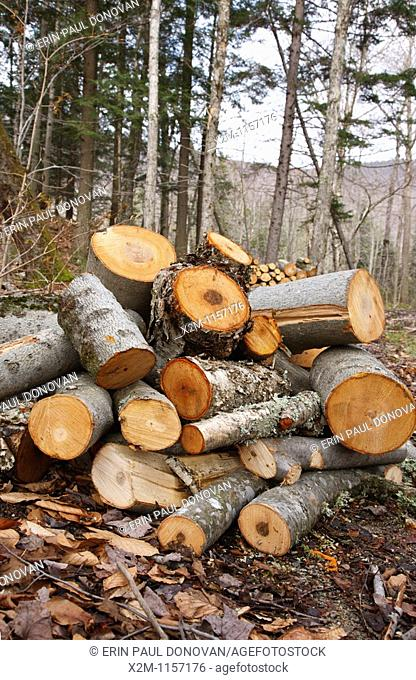 Franconia Notch State Park - Freshly cut hardwood in Lincoln, New Hampshire USA