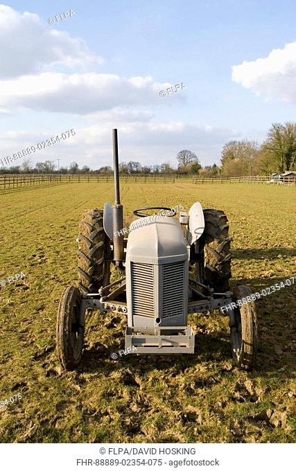 Little grey fergie tractor Stock Photos and Images | age