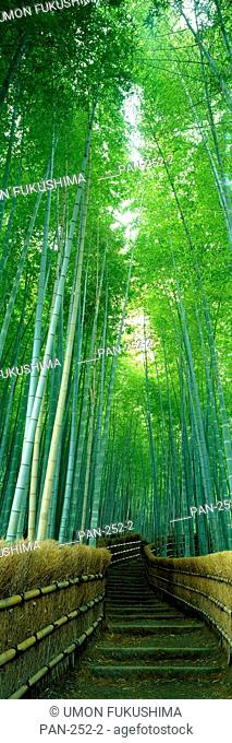 Path Through Bamboo Forest, Kyoto, Japan