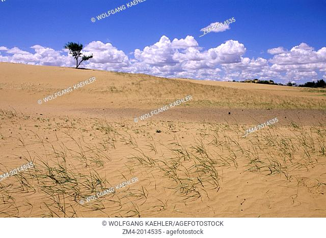 CENTRAL MONGOLIA, NEAR KHOGNO KHAN MOUNTAINS, SAND DUNES, TREE