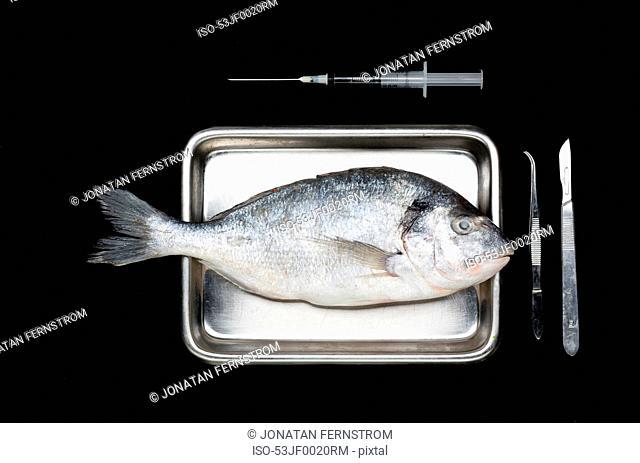 Fresh fish on surgery tray