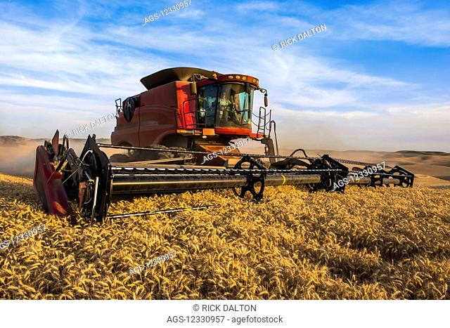 A Combine Harvests Grain In The Palouse Region Of Eastern Washington; Washington, United States Of America