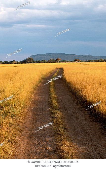 Africa, Kenya, Masai Mara , Road in the Savanna