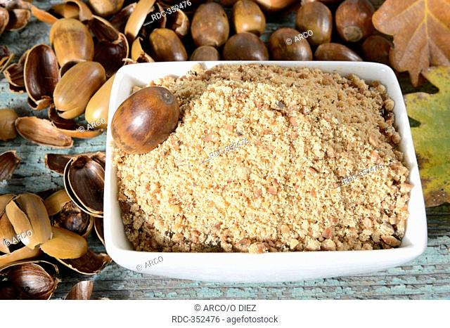 Acorn flour, powder, common oak / Quercusrobur