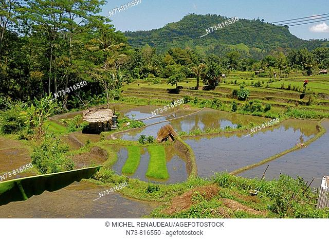Rice field on the way to Mount Agung, Bali, Indonesia
