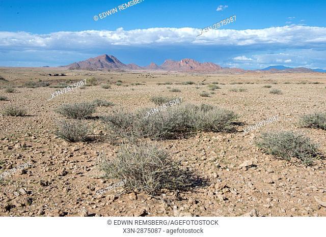 Desert vegetation in the Namib desert, located in Namibia, Africa