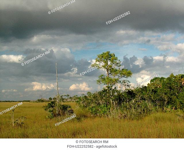 Everglades National Park, FL, Florida, wetlands, freshwater marsh
