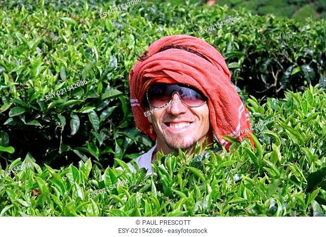 caucasian man at tea plantation, kerala, india