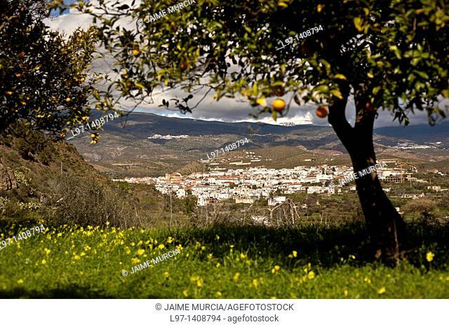 View past an orange tree to a village in the Alpujarra's Granada, Spain