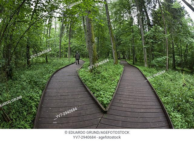 Wooden path. Bialowieza National Park. Bialowieza, Podlaquia, Poland, Europe