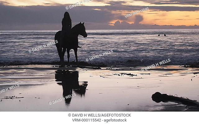 Horse and rider on the baech in Morro Bay, California