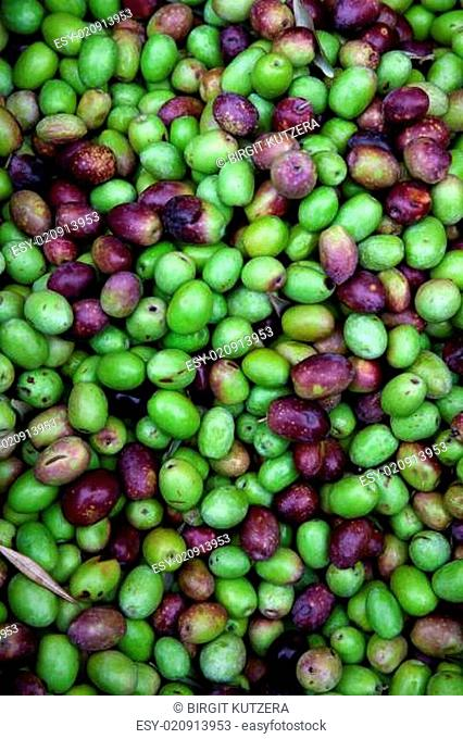 Frische schwarze und grüne Oliven auf einem Markt