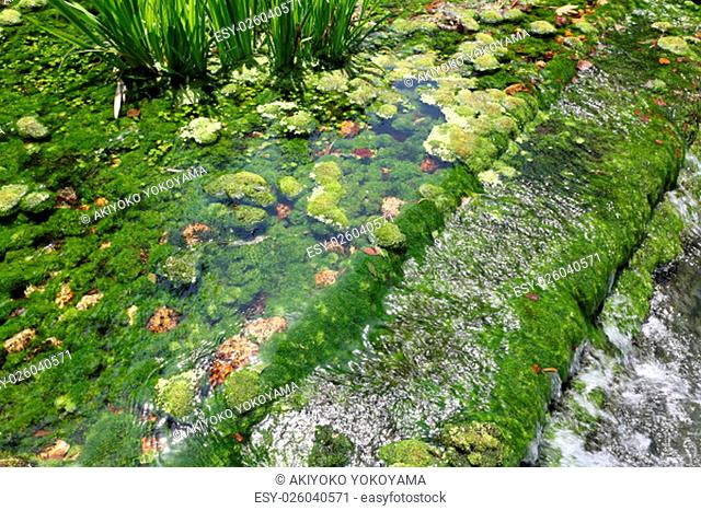Japanese garden with pond and river's plant