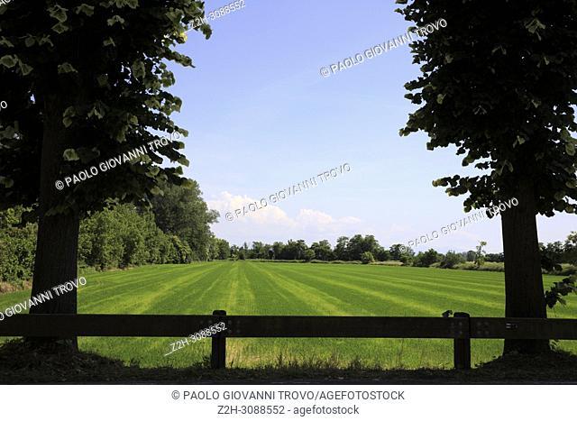 Rice field near Pavia, Pavia, Lombardy, Italy