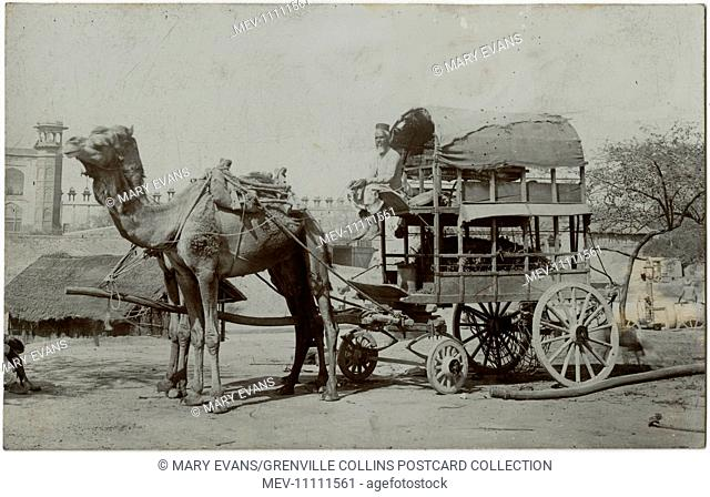 Agra, India - An utterly fabulous Double-decker two camel-drawn wagon, with driver perched on the upper level