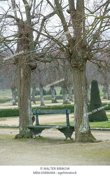 France, department Seine-et-Marne, chateau de Fontainebleau, palace-park, trees, park-bank, old, winter, park, park, sterns, broad-leafed trees, bald, ways