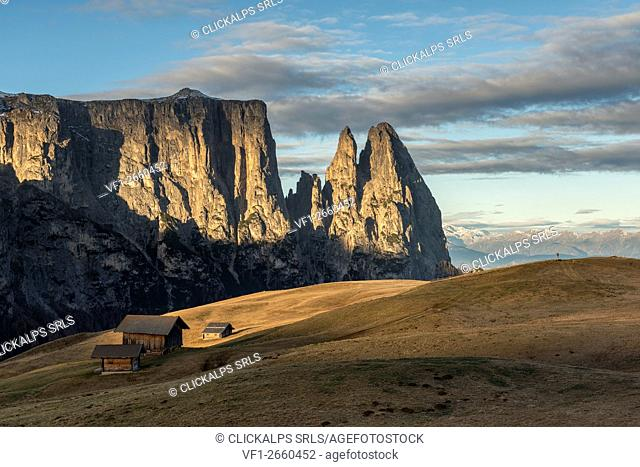 Alpe di Siusi/Seiser Alm, Dolomites, South Tyrol, Italy. Autumn on the Alpe di Siusi/Seiser Alm. In the background the peaks of Sciliar/Schlern