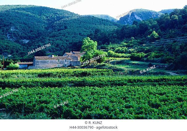 Farmhouse, Mas, vine yards, Luberon Nature Park, Vaucluse department, Provence, France