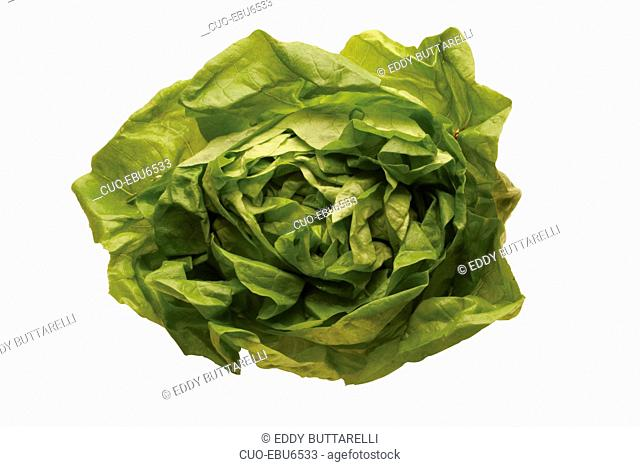 Lettuce, Italy