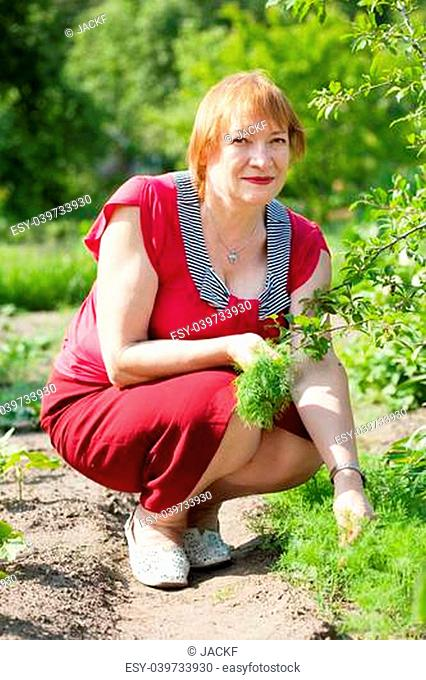 Mature woman picking dill in garden