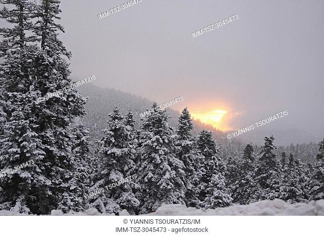 Snow covered trees with a cloudy sun setting in the background. Kellaria, Parnassos, Arachova, Viotia, Central Greece, Europe