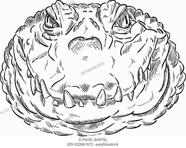 crokodile head