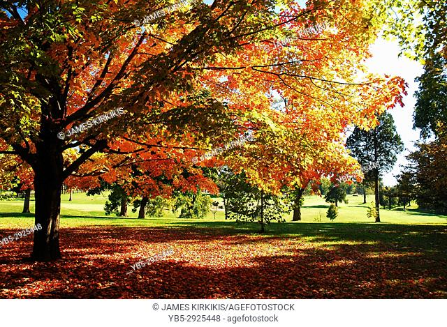 Trees in Bardstown, Kentucky shows a Brilliant Autumn Hue