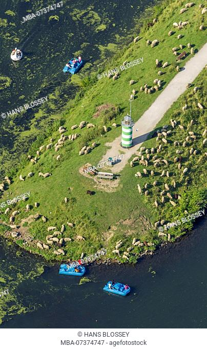Aerial view, algae growth Top of headland with sheep, paddle boats, Kemnader reservoir, Kemnader lake, Witten, Ruhr area, North Rhine-Westphalia, Germany