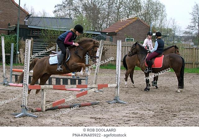 Horse Equus spp