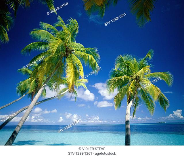 Beach, Clouds, Exotic, Holiday, Horizons, Landmark, Palms, Paradise, Sky, Tourism, Tranquility, Travel, Trees, Tropical, Vacatio