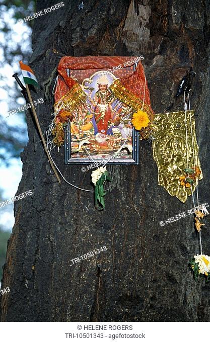 Mumbai Formerly Bombay  India Ornate Street Shrine on Tree