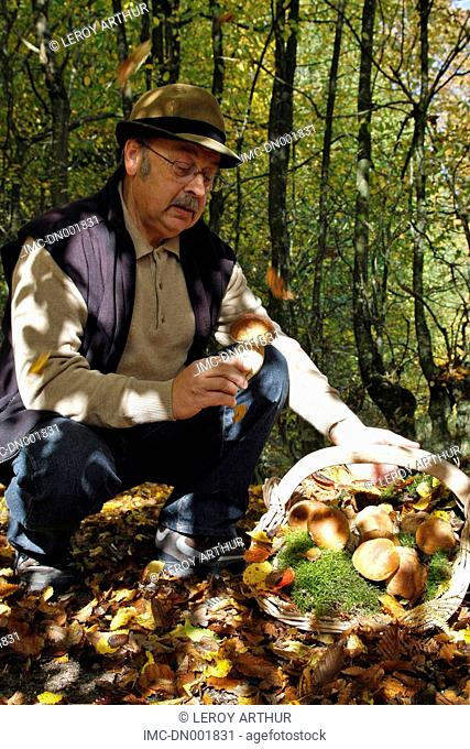 France, Centre, forest of Senonches, mushroom picker