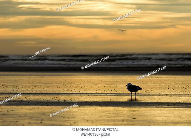 seagull by the beach