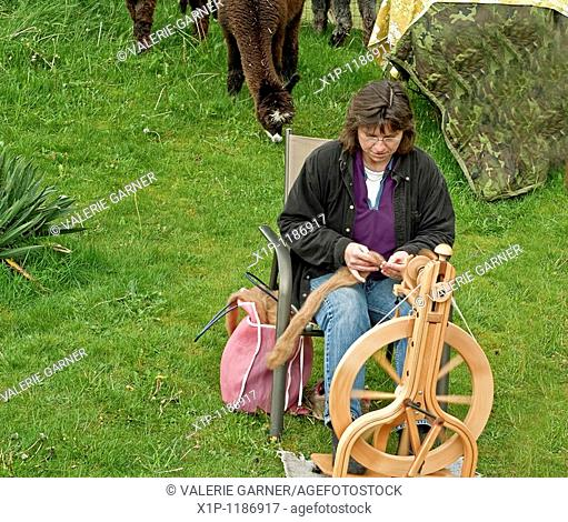 This rural woman is spinning on a spinning wheel alpaca fur into thread on her farm with her alpacas in the background She is very talented in her craftsmanship