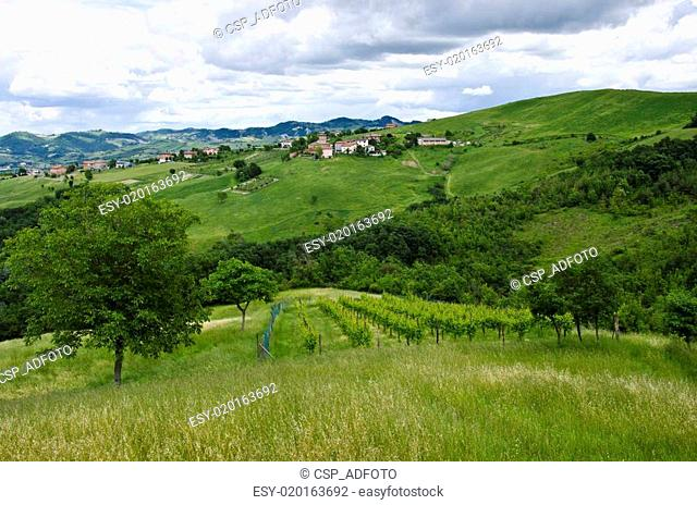 View of vineyard and village