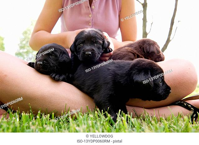 Teenager holding puppies