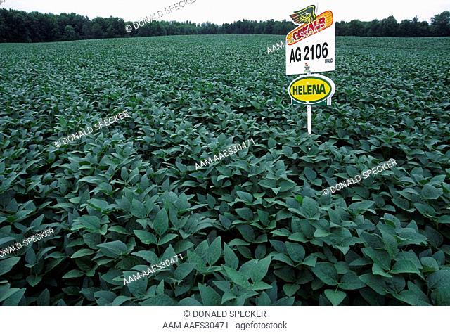 Herbicide-resistant genetically-modified Soybeans, Western NY