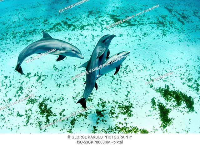 Dolphins swimming in tropical water