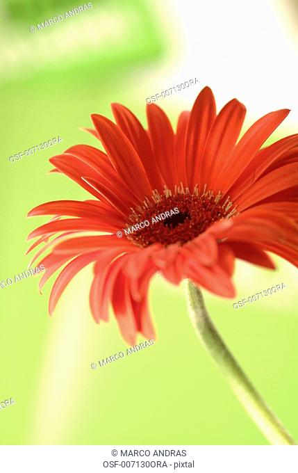 one plan natural flower standing