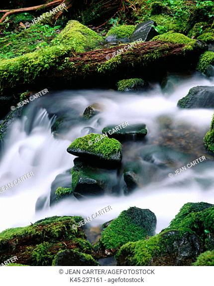 Cascade along Sol Duc Falls trail. Olympic National Park. Washington. USA