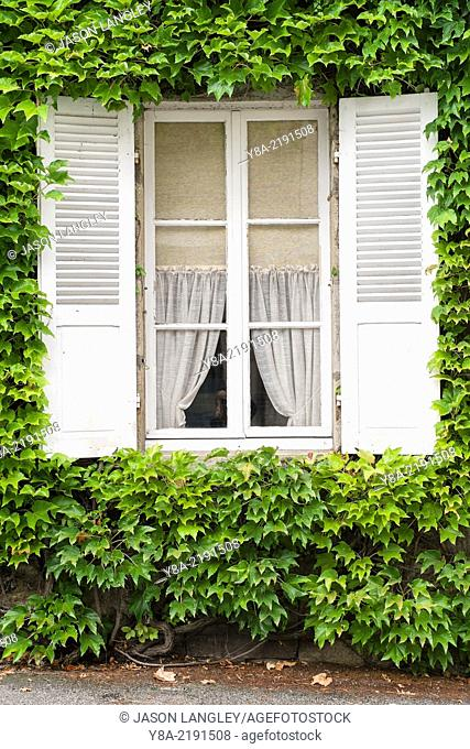 Window of a house with vines (Parthenocissus tricuspidata) growing on exterior wall, Argentat, Corrèze department, Limousin, France