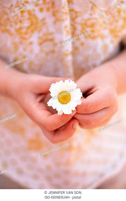 Cropped view of girl holding daisy flower