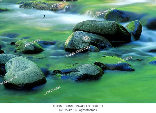 Rapids and boulders in Middle Prong of Little River with forest reflections, Great Smoky Mountains National Park, Tennessee, USA