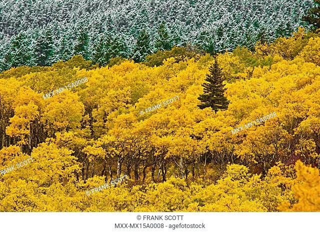 Autumn, Glacier National Park, Montana, USA