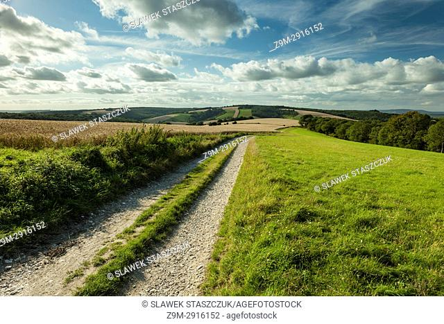 Summer afternoon in South Downs National Park, West Sussex