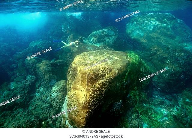 Snorkeler dives down to observe the substrate, St Peter and St Paul's rocks, Brazil, Atlantic Ocean