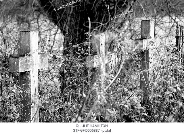Three Stone Crosses.. by a tree in an untended graveyard
